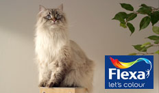 Flexa – Verfpakket