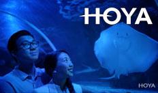Hoya – Energize